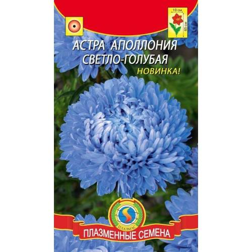Астра Апполония Светло-голубая