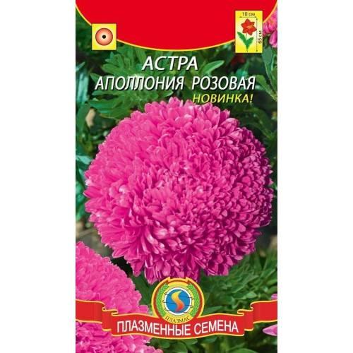 Астра Апполония Розовая