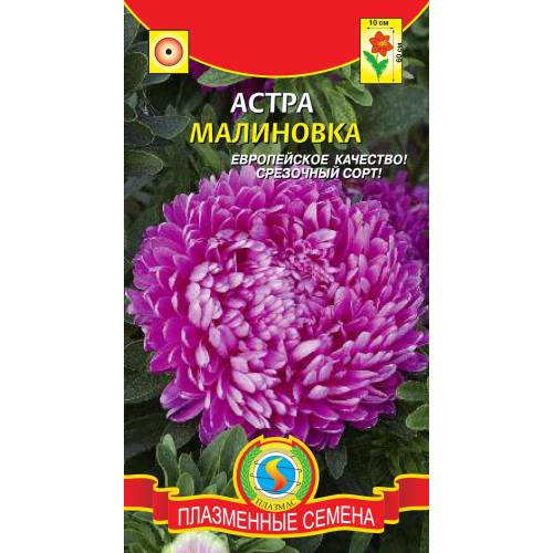 Астра Малиновка