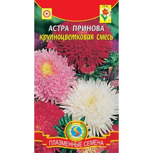 Астра Принова крупноцветковая смесь