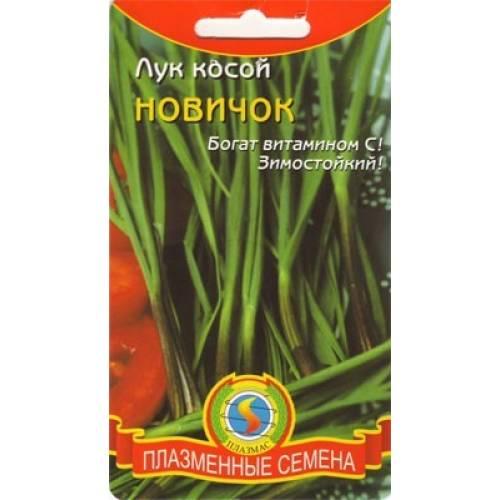 Лук косой Новичок