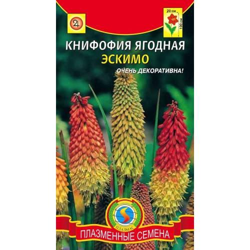 Книфофия ягодная Эскимо