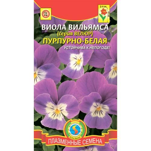 Виола вильямса Пурпурно-белая