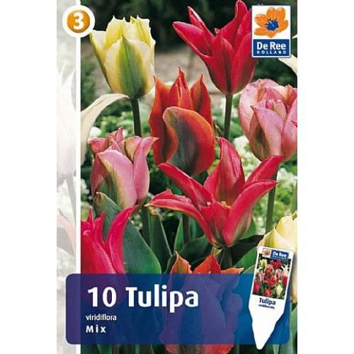 Тюльпан Viridiflora Mix