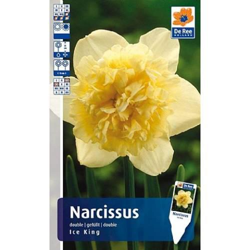 Нарцисс Ice King