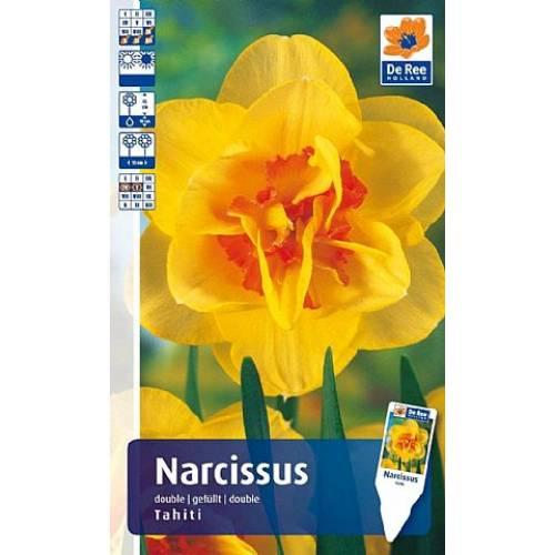 Нарцисс Tahiti